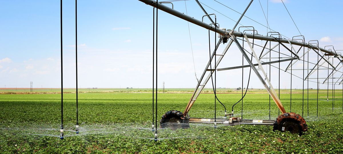 A cotton field being watered remotely