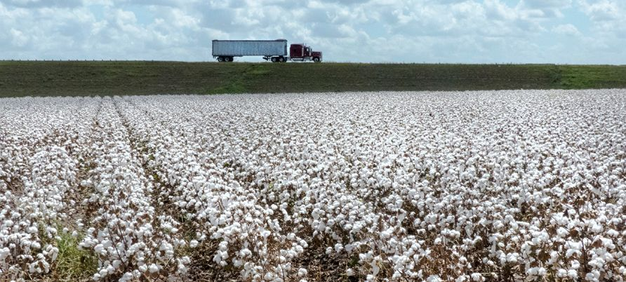 A truck in the horizon passing by a cotton field