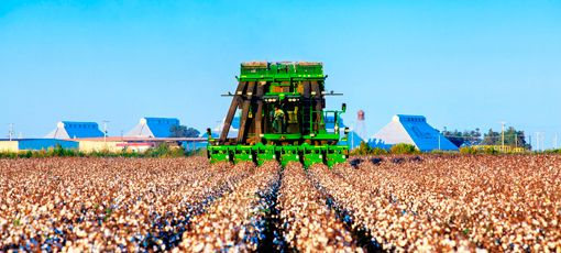 Green machine picking up cotton bolls at a cotton farm