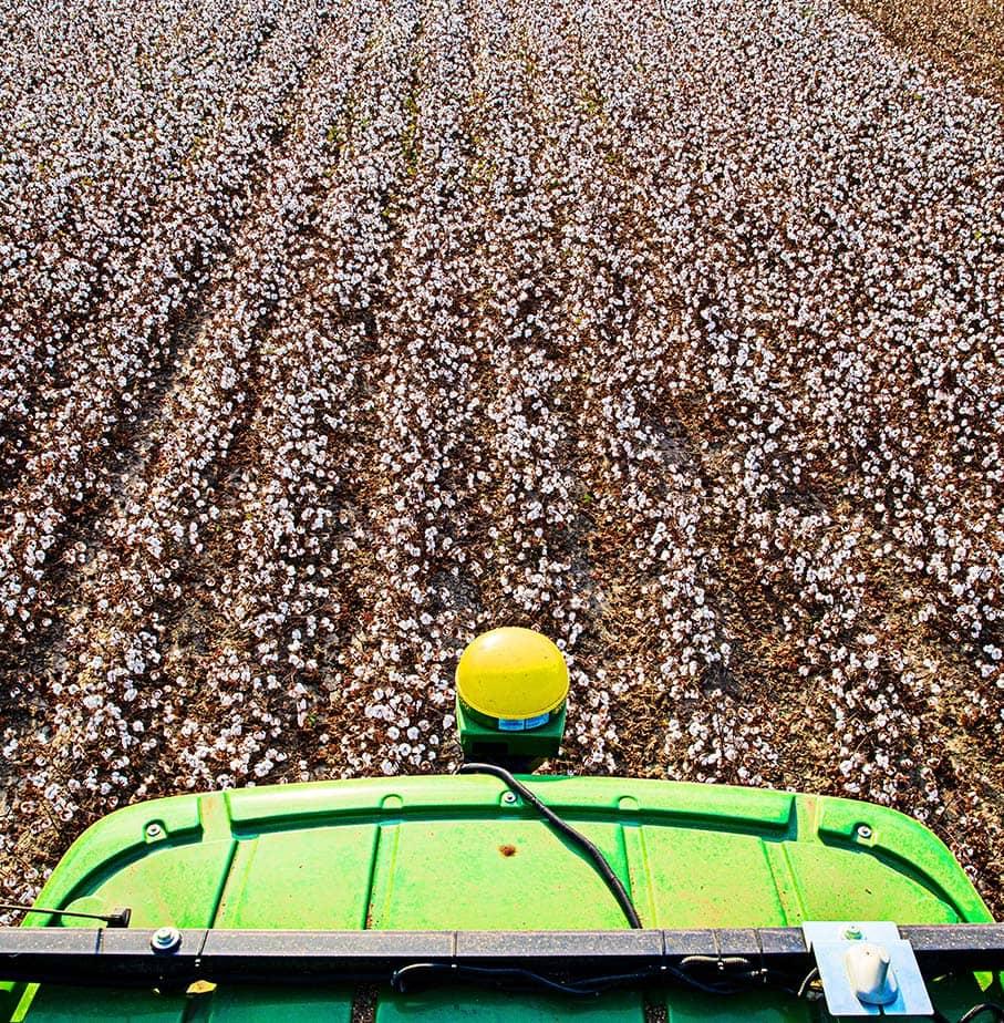 Cotton machine collecting cotton